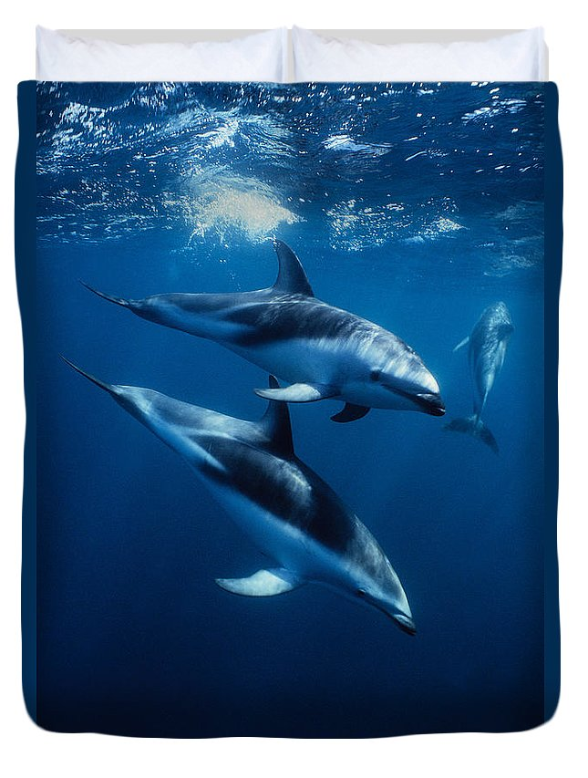 Underwater Duvet Cover featuring the photograph Dusky Dolphin, Lagenorhynchus Obscurus by Gerard Soury