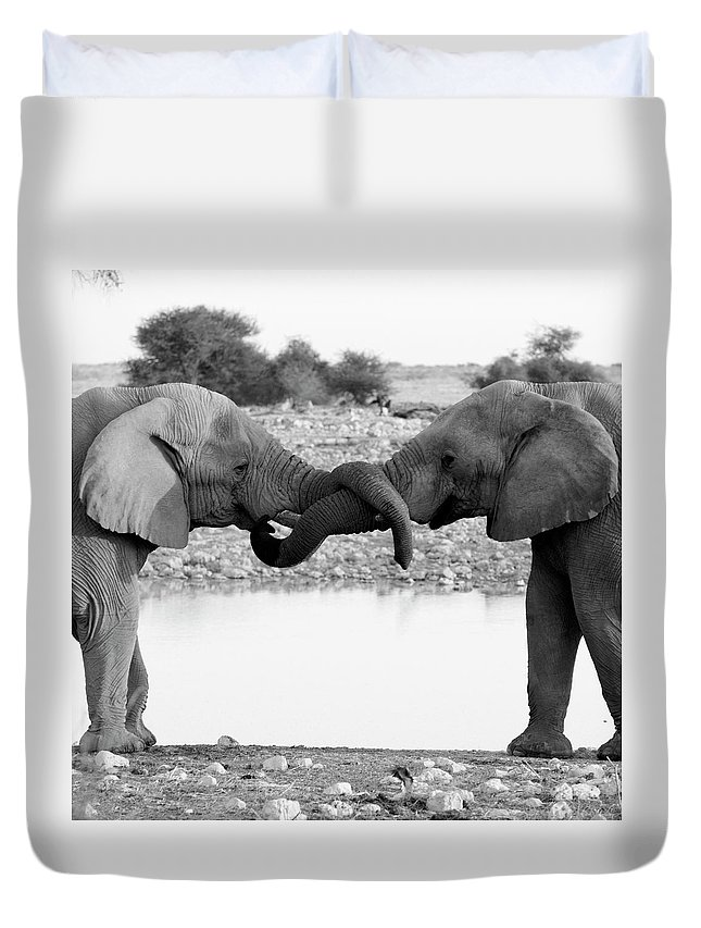 Animal Trunk Duvet Cover featuring the photograph Elephants Curling Trunk by Harrykolenbrander