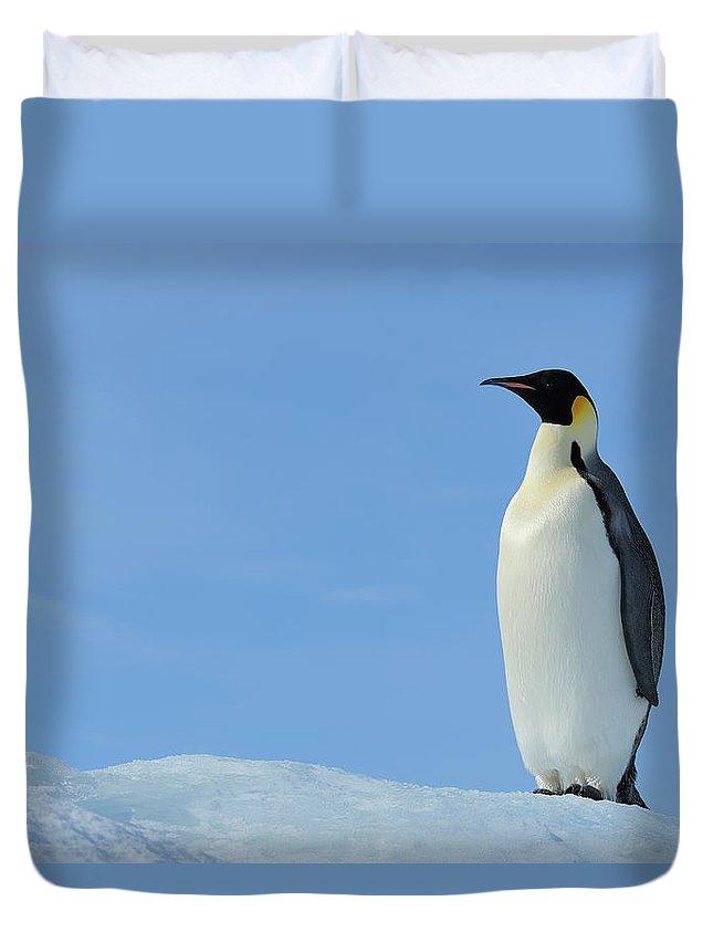Emperor Penguin Duvet Cover featuring the photograph Emperor Penguin by Raimund Linke