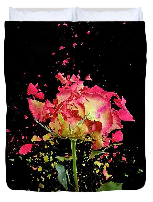 Black Background Duvet Cover featuring the photograph Exploding Rose by Don Farrall