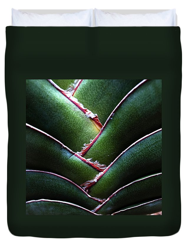 Natural Pattern Duvet Cover featuring the photograph Fan Leave Succulent Plant by Tontygammy + Images