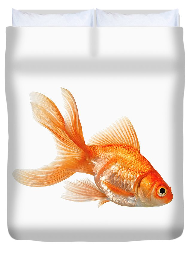 Orange Color Duvet Cover featuring the photograph Fancy Goldfish by Don Farrall