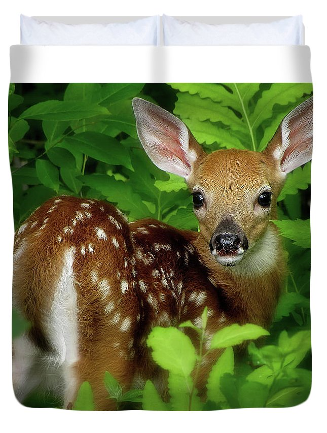 Fawn Duvet Cover featuring the photograph Fawn by Jerry LoFaro
