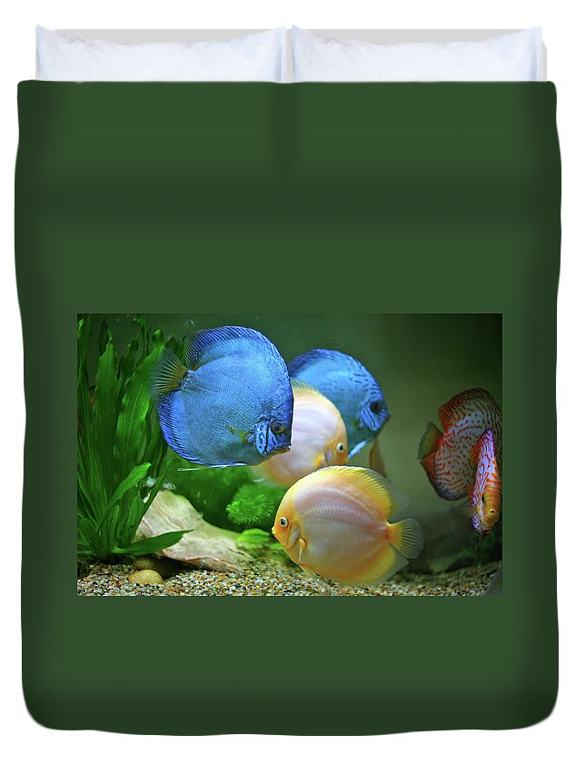 Underwater Duvet Cover featuring the photograph Fish In Water by Vietnam