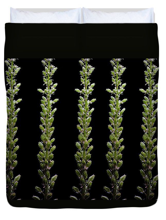 Bud Duvet Cover featuring the photograph Flower Buds On Black Background by Michael Duva