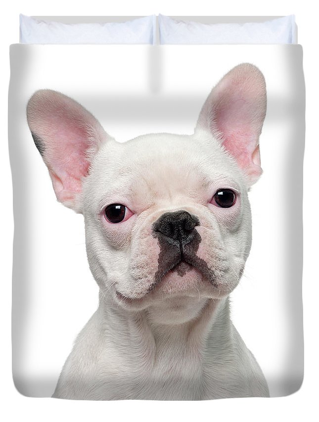 Pets Duvet Cover featuring the photograph French Bulldog Puppy 5 Months Old by Life On White