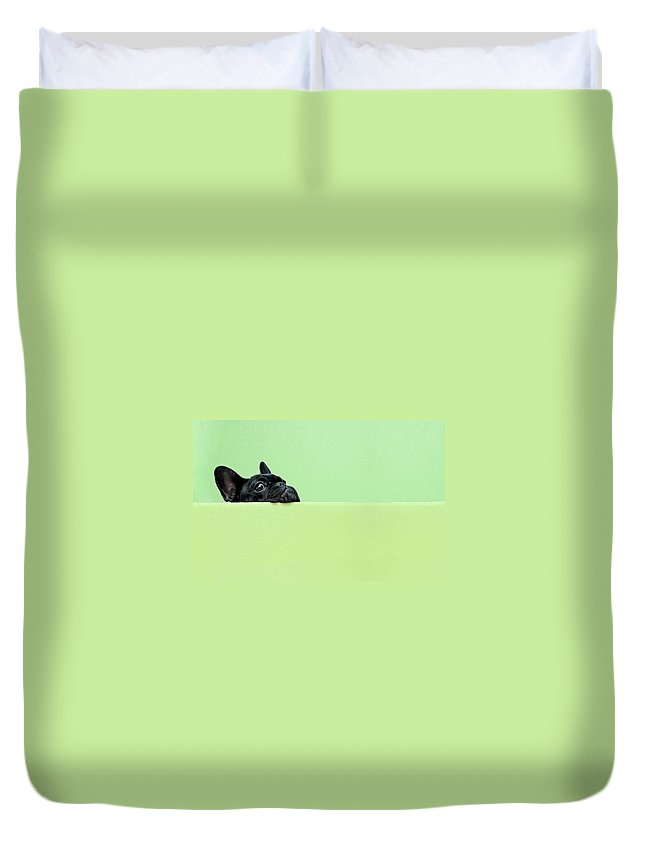 Pets Duvet Cover featuring the photograph French Bulldog Puppy by Retales Botijero