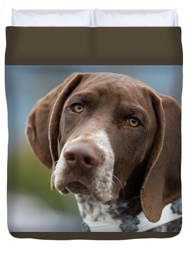 Pets Duvet Cover featuring the photograph German Shorthair Pointer With Building by Markhatfield