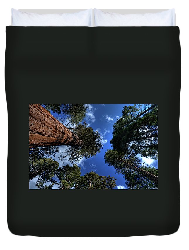 Sequoia Tree Duvet Cover featuring the photograph Giant Sequoias - 2 by Rhyman007