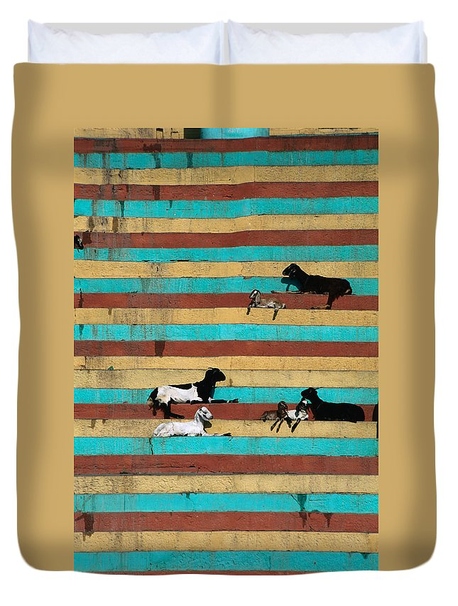 Steps Duvet Cover featuring the photograph Goats Resting On The Tulsi Ghats by Anders Blomqvist