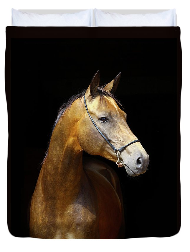 Horse Duvet Cover featuring the photograph Golden Horse by Photographs By Maria Itina
