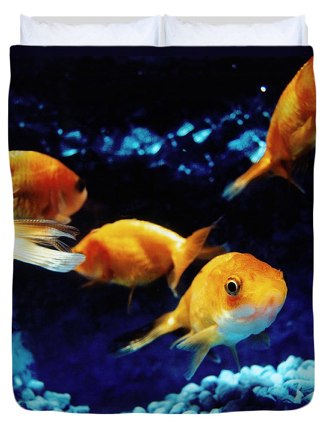 Pets Duvet Cover featuring the photograph Goldfish In Fish Tank by Silvia Otte