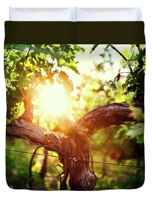 Dawn Duvet Cover featuring the photograph Grape Vine And Trunk In Late Spring by Ryanjlane