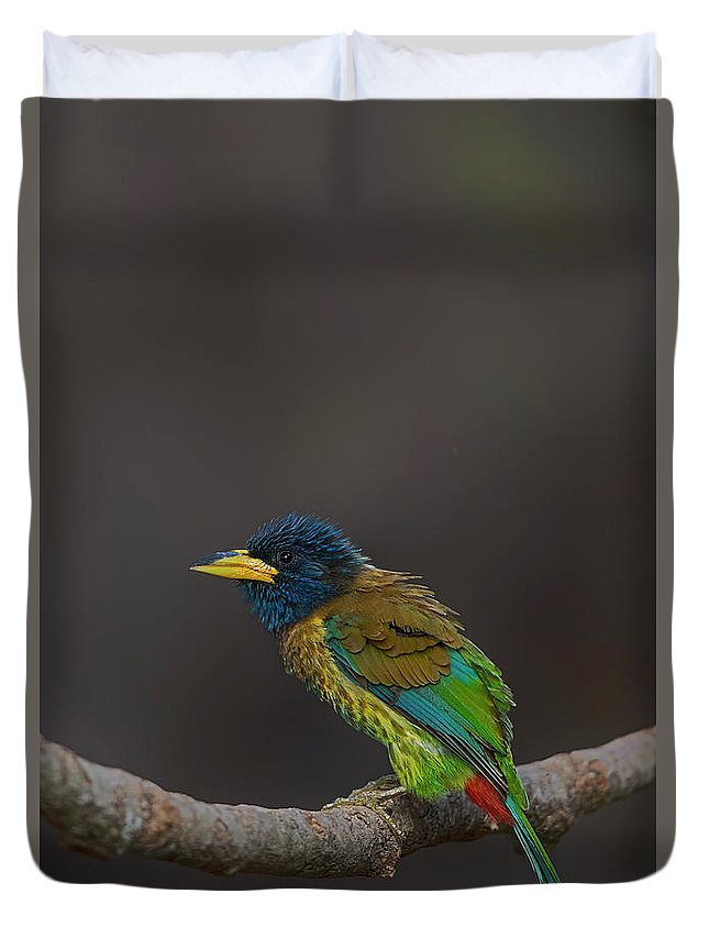 Bird Images For Print Duvet Cover featuring the photograph Great Barbet by Uma Ganesh