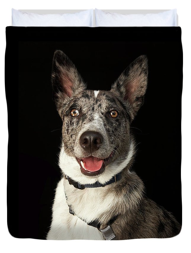 Pets Duvet Cover featuring the photograph Grey And White Australian Shepherd With by M Photo