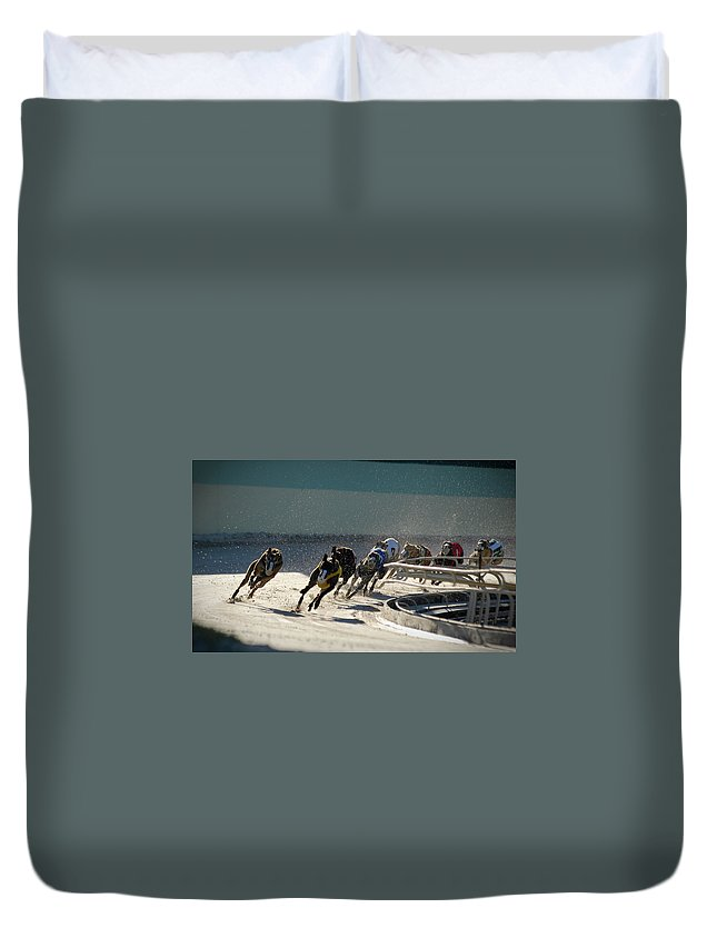 Dust Duvet Cover featuring the photograph Greyounds 3 Of 7 by Dplight