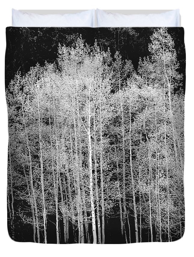 Outdoors Duvet Cover featuring the photograph Grove Of Aspen Trees Populus by David Epperson