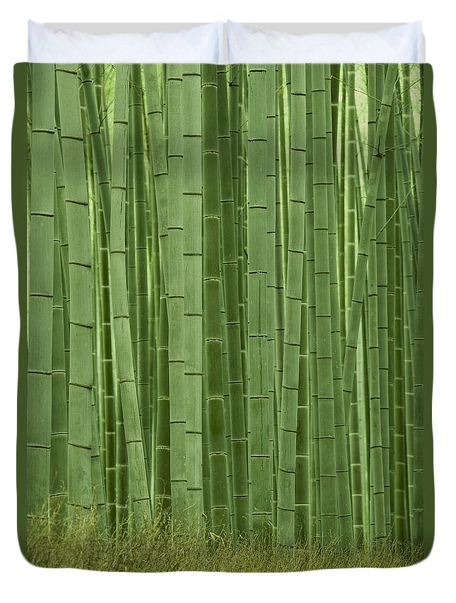 Bamboo Duvet Cover featuring the photograph Grove Of Bamboo Trees Phyllostachys by Akira Kaede