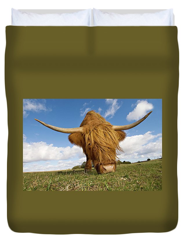 Horned Duvet Cover featuring the photograph Hairy, Horned, Highland Cow Grazing by Clarkandcompany