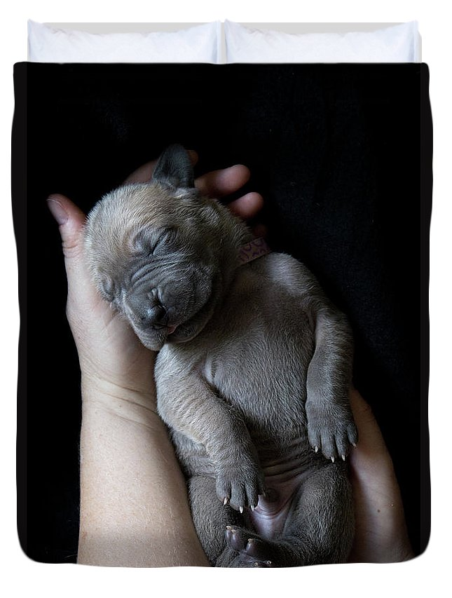 People Duvet Cover featuring the photograph Hands Holding A Sleeping Puppy by Ben Robson