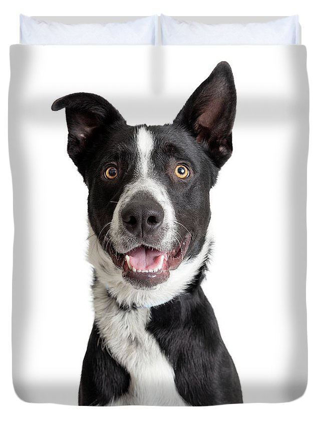 Canine Duvet Cover featuring the photograph Happy Smiling Border Collie Crossbreed Dog Closeup by Susan Schmitz