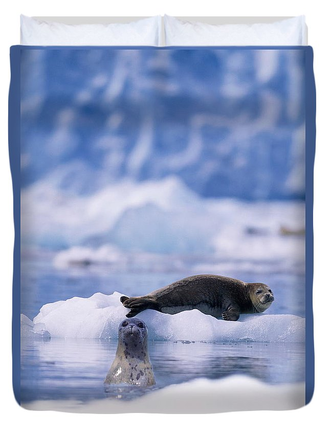 Animal Themes Duvet Cover featuring the photograph Harbor Seal Phoca Vitulina In Glacial by Paul Souders