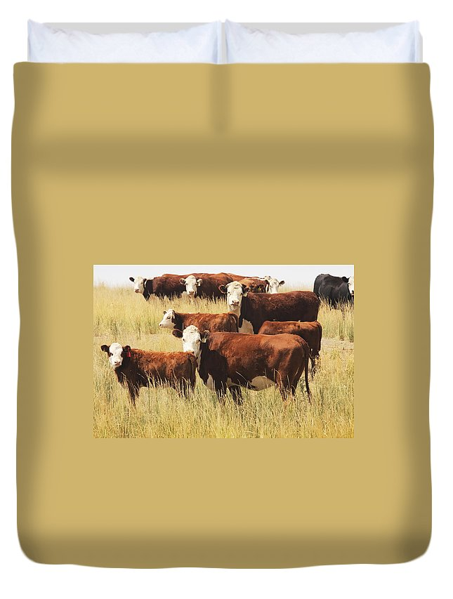 Non-moving Activity Duvet Cover featuring the photograph Hereford Cow Farm Pasture Livestock by Chuckschugphotography