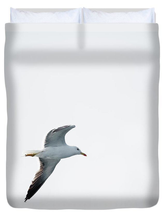 Sweden Duvet Cover featuring the photograph Herring Gull In Flight by Magnusson, Roine