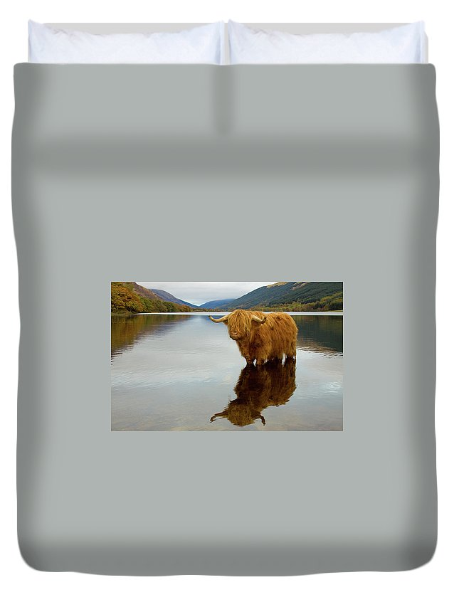 Horned Duvet Cover featuring the photograph Highland Cow by Empato
