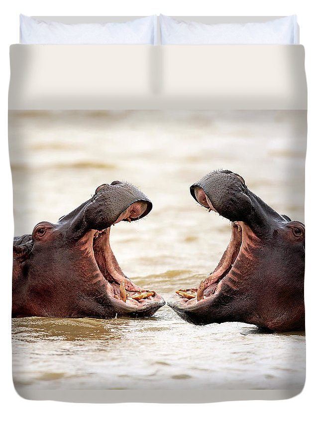 Isimangaliso Wetland Park Duvet Cover featuring the photograph Hippopotamus by Tier Und Naturfotografie J Und C Sohns