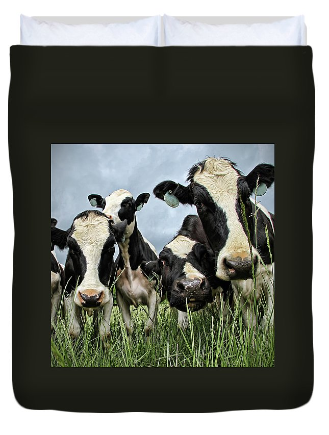 Grass Duvet Cover featuring the photograph Holstein Cows by C. M. Yost