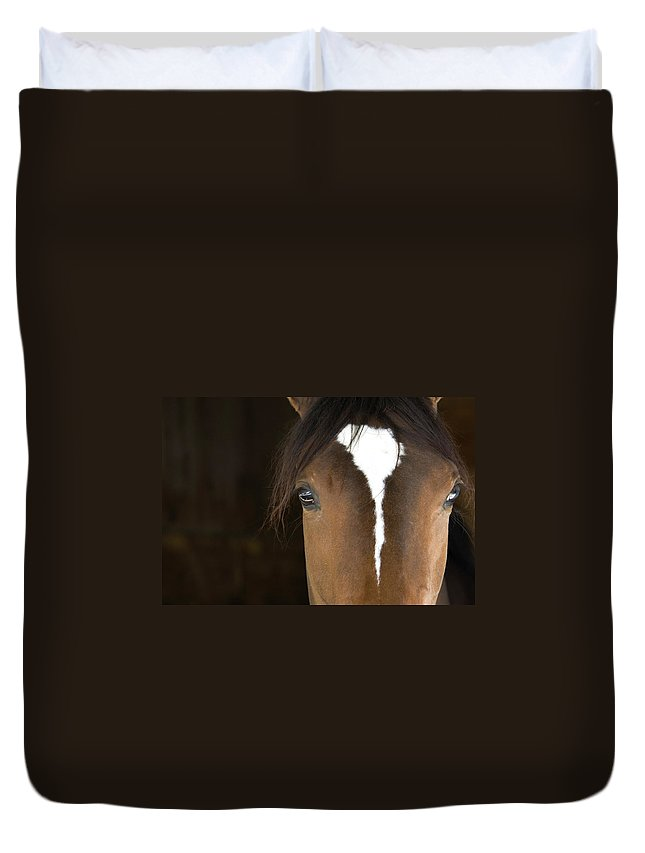Horse Duvet Cover featuring the photograph Horse Head by Rterry126