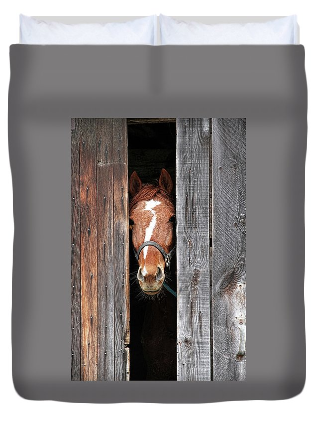 Horse Duvet Cover featuring the photograph Horse Peeking Out Of The Barn Door by 2ndlookgraphics