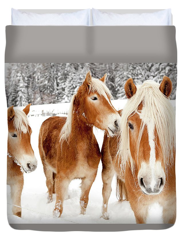 Horse Duvet Cover featuring the photograph Horses In White Winter Landscape by Angiephotos