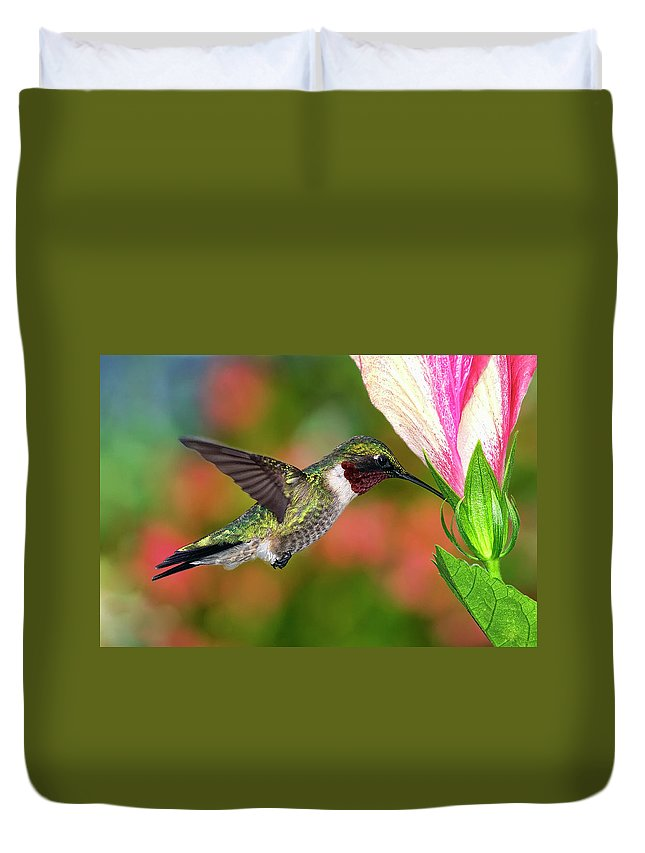 Animal Themes Duvet Cover featuring the photograph Hummingbird Feeding On Hibiscus by Dansphotoart On Flickr
