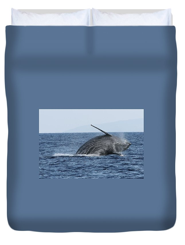 Animal Duvet Cover featuring the photograph Humpback Whale Breach 2 Of 3 by Adwalsh