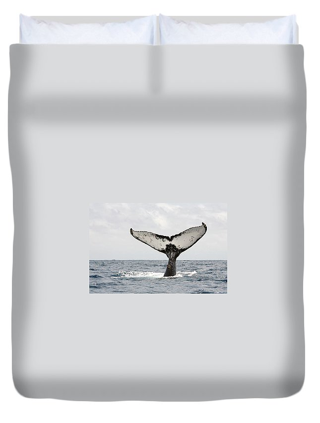 Animal Themes Duvet Cover featuring the photograph Humpback Whale Tail by Photography By Jessie Reeder