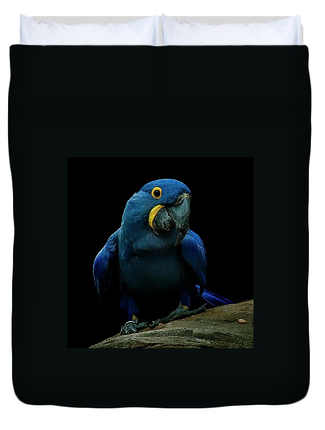 Macaw Duvet Cover featuring the photograph Hyacinth Macaw by Photo By Steve Wilson