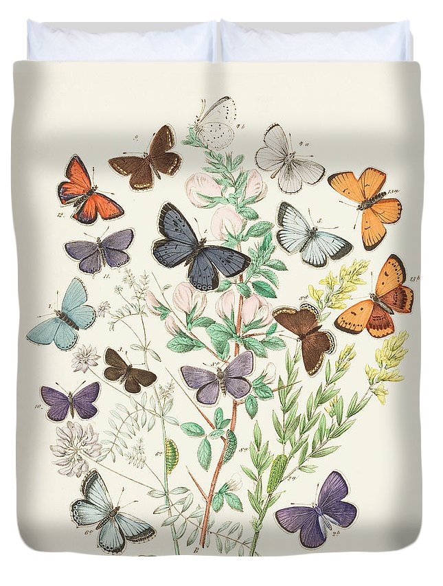 Watercolor Painting Duvet Cover featuring the digital art Illustration Of Butterflies And Green by Dorling Kindersley