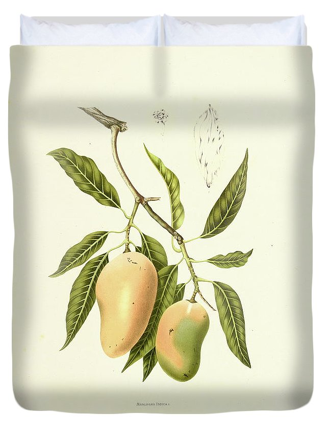 Artist Duvet Cover featuring the digital art Indian Mango | Antique Plant by Nicoolay