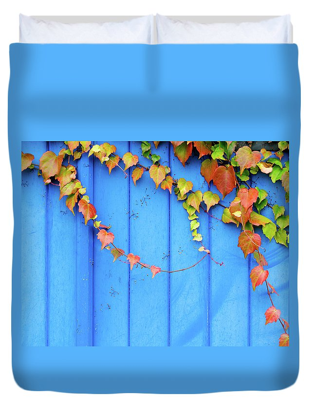 Architectural Feature Duvet Cover featuring the photograph Ivy On The Door by Zianlob