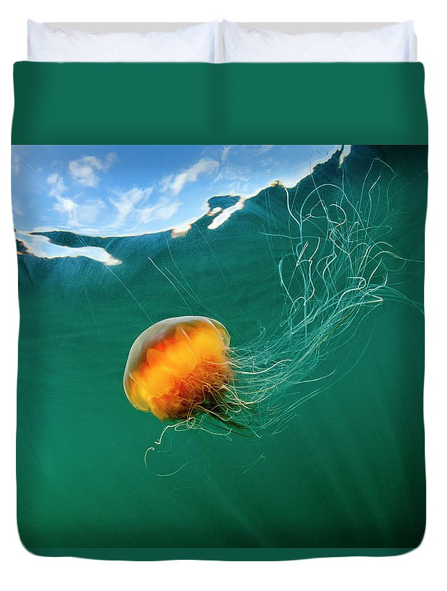Underwater Duvet Cover featuring the photograph Jellyfish, Alaska by Paul Souders
