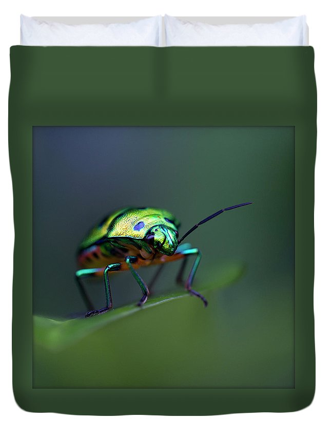 Insect Duvet Cover featuring the photograph Jewel Bug, Auroville, Tamil Nadu, India by Lal