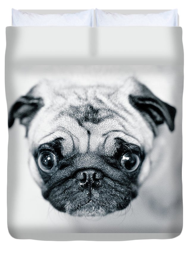Pets Duvet Cover featuring the photograph Just Enough by Eddy Joaquim
