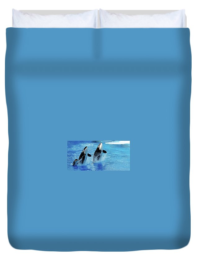 Panoramic Duvet Cover featuring the photograph Killer Whale Family Jumping Out Of Water by Purdue9394