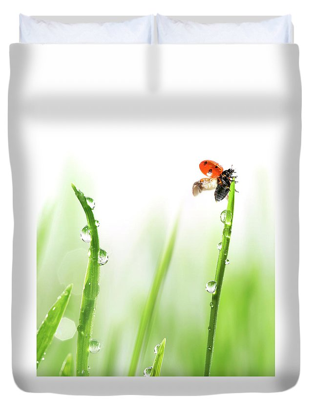 Hanging Duvet Cover featuring the photograph Ladybug On Green Grass by Sbayram