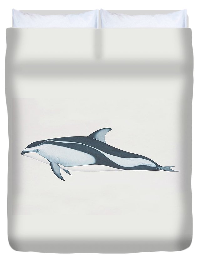 White Background Duvet Cover featuring the digital art Lagenorhynchus Obliquidens, Pacific by Martin Camm
