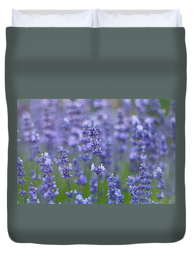 Otago Region Duvet Cover featuring the photograph Lavender Flowers by Jill Ferry
