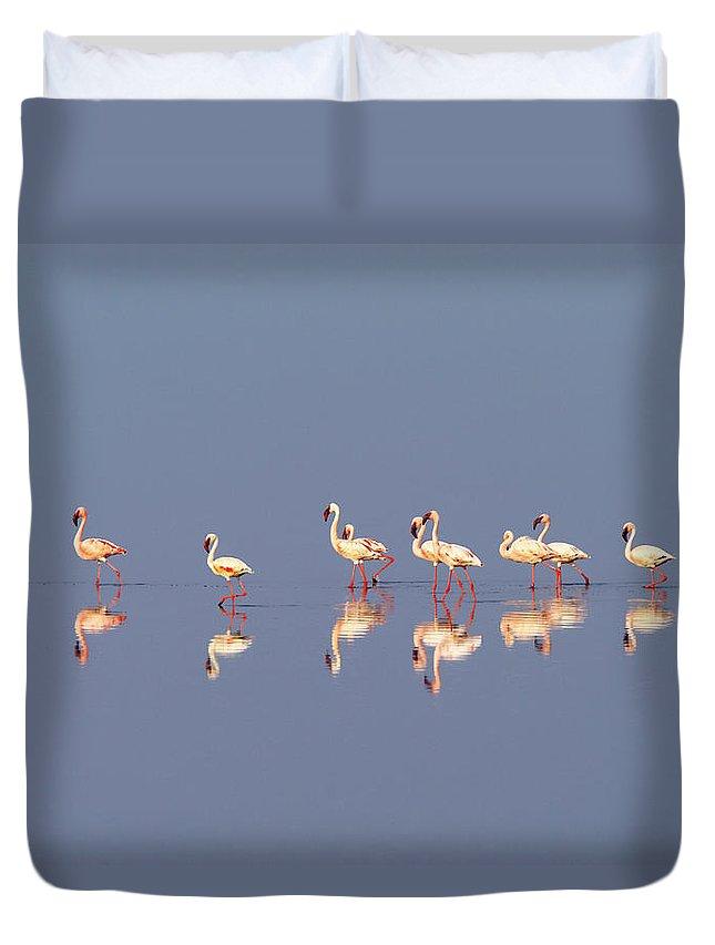 Tanzania Duvet Cover featuring the photograph Lesser Flamingo, Lake Natron, Tanzania by Ben Cranke