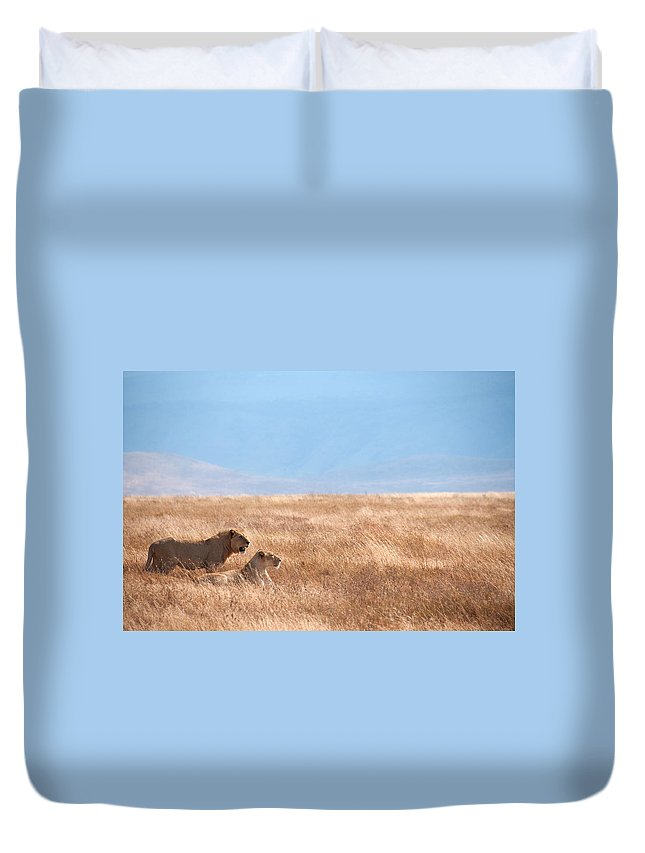 Scenics Duvet Cover featuring the photograph Lion Couple In Ngorongoro Crater by Ceneri